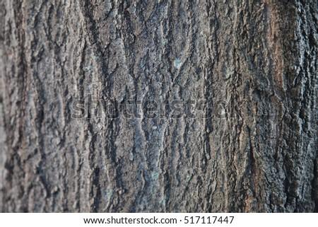 Tree #517117447