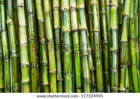cane sugar Royalty-Free Stock Photo #517324945