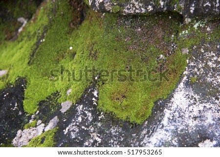 The green moss on the rocks #517953265