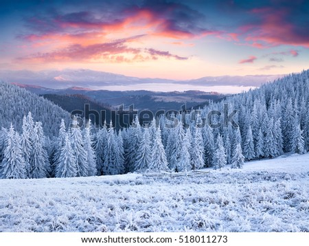 Unbelievable winter sunset in Carpathian mountains with snow covered grass and fir trees. Beautiful outdoor scene, Happy New Year celebration concept. Artistic style post processed.