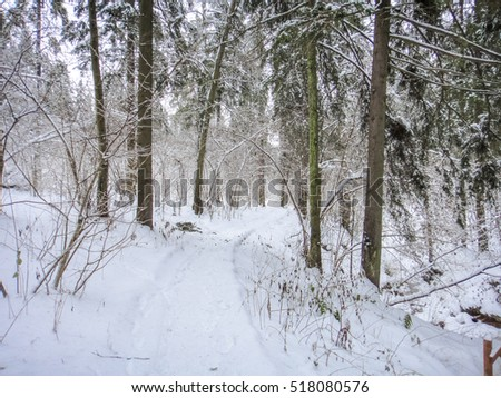 Winter forest in cold Russia #518080576