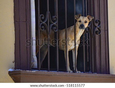 Doggy in the Window #518115577