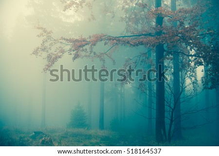 Amazing bluish foggy light in mystical autumn forest - trees and large branches with fall orange leaves against cold spooky woods background - Happy Halloween card landscape backdrop #518164537