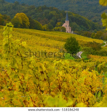 View of Andlau village and churche in wineyard, autumn, Alsace, France #518186248