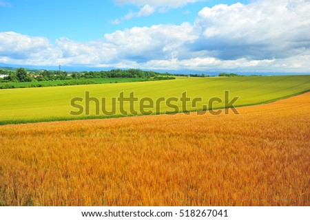 Wheat Field Landscape in Countryside #518267041