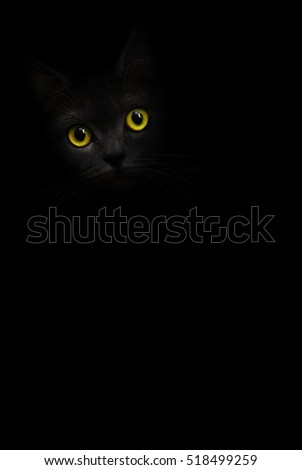 Vertical image black cat portrait with yellow eyes is looking out of the shadow on the black background. Cute dark kitten. Cat head in the darkness