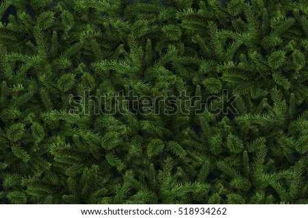 Background of Christmas tree branches. #518934262
