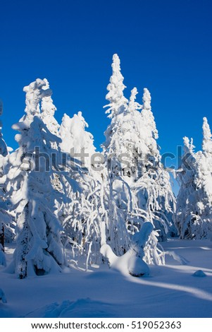 Photo of frost nature with flock cold snow #519052363