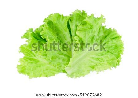 Salad leaf. Lettuce isolated on white background. #519072682