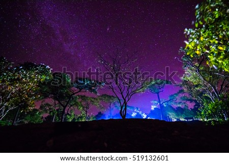 The Milky Way and some trees #519132601