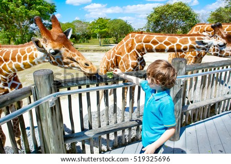 Little kid boy watching and feeding giraffe in zoo. Happy child having fun with animals safari park on warm summer day. Royalty-Free Stock Photo #519325696