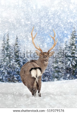 Close young deer in nature. Winter time #519379576