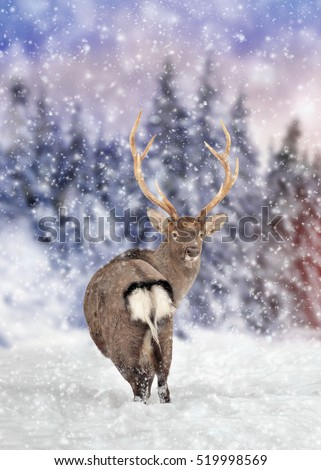 Close young deer in nature. Winter time #519998569