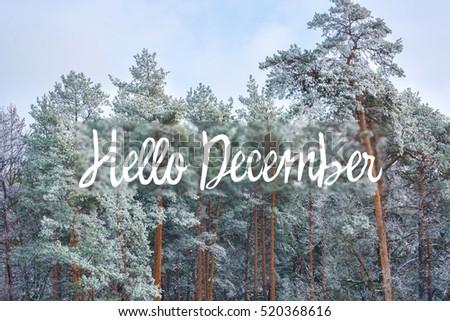 hello december (winter) card Royalty-Free Stock Photo #520368616