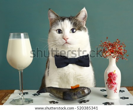 cat with milk and raw fish - funny photo advertising healthy natural food for pats