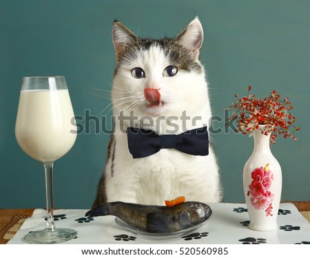 cat tongue lick lips with milk and raw fish - funny photo advertising healthy natural food for pats