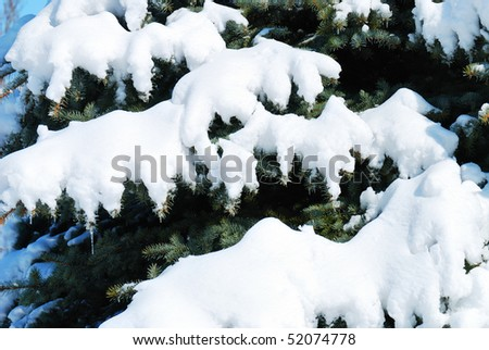 Background from a fur-tree covered with snow Royalty-Free Stock Photo #52074778