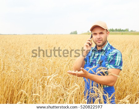 Farmer in a plaid shirt controlled his field. Talking on the phone. Wheat harvest. Agriculture. #520822597