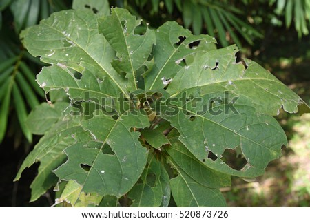 green leaf with hole #520873726