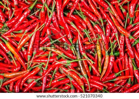red chilli background #521070340