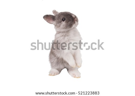 baby cute rabbit or new born adorable bunny on white background