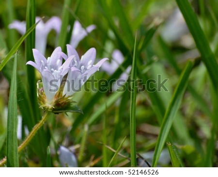 close up of delicate, lavender colored flower #52146526
