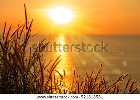 Feather pennisetum or Mission grass backlitght glow against the sunlight. Beautiful sunset  landscape of andaman sea and bokeh background