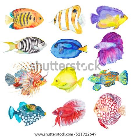 Watercolor colorful set fishes. Flame angelfish, Copperband Butterflyfish, Purple mask angelfish, Zebra angelfish, Blue Tang, Betta splendens, Lion, Yellow tang, Mandarine, Trigger, Red discus