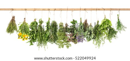 Fresh herbs hanging isolated on white background. Basil, rosemary, sage, thyme, mint, oregano, dill, marjoram, savory, lavender, dandelion.   #522049924