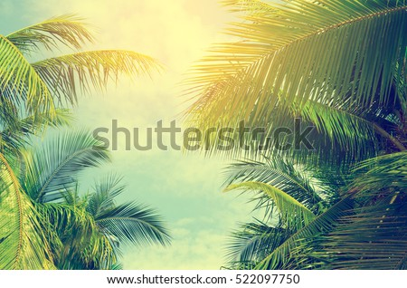 Palm trees against blue sky, Palm trees at tropical coast, vintage toned and stylized, coconut tree,summer tree ,retro #522097750