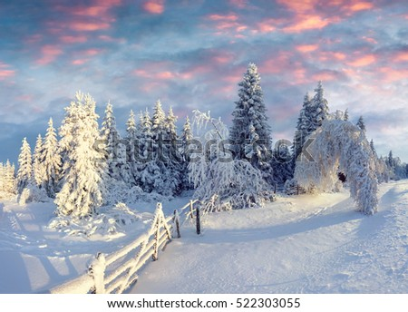Frosty winter morning in mountain forest with snow covered fir trees. Colorful outdoor scene, Happy New Year celebration concept. Artistic style post processed photo.