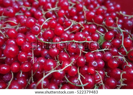 Red currant #522379483