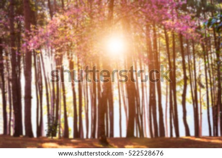 Blurred Forest and sunset at Pang Ung ,Mae Hong Son #522528676