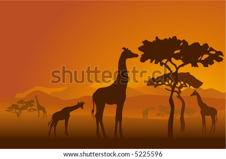 Silhouettes of giraffes in national park of Kenya #5225596