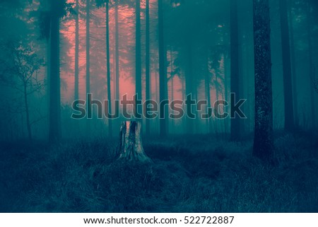 Old gray tree stump waiting for night to come in dry autumn grassy ground of cold scary foggy forest landscape background - magical pink red sunset light of spooky woods Happy Halloween card  #522722887