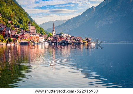White swan on the lake Hallstatter See. Sunny morning scene on the pier of Hallstatt village in the Austrian Alps, Liezen District of Styria, Austria, Alps. Europe. Artistic style post processed photo