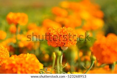orange flowers in the sky. #523268953
