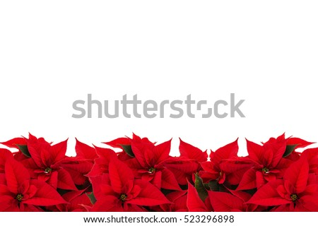 Border picture frame of red christmas flowers on a white background