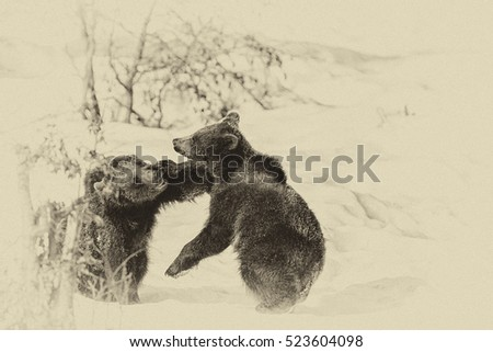 Vintage style image of two young Brown Bears (Ursus arctos) in Lake Clark National Park, Alaska, USA #523604098