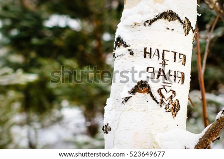 Love message with two russian names (Nastya+Vanya) carved into the bark of a russian birch tree #523649677