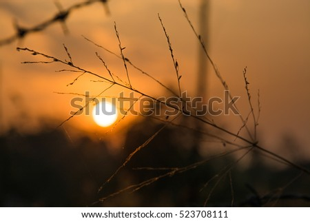 Silhouette of morning sun through the dry leaf on the summer time in Thailand at dawn using as a presentation or powerpoint