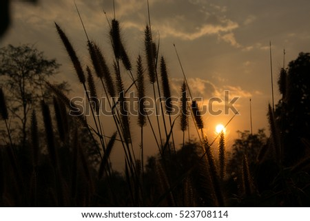 Silhouette of Wayside flower grass on the summer time in Thailand at dawn using as a presentation or powerpoint sun on top
