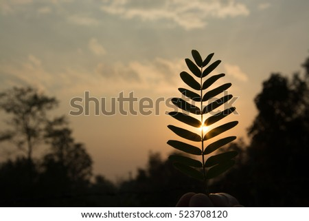 Silhouette of morning sun through the leaves on the summer time in Thailand at dawn using as a presentation or powerpoint