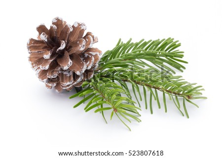 Fir tree branch and cones isolated on white background. #523807618