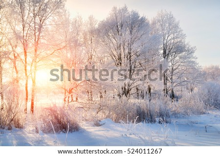 Winter landscape - frosty trees in snowy forest in the sunny morning. Tranquil winter nature in sunlight  Royalty-Free Stock Photo #524011267