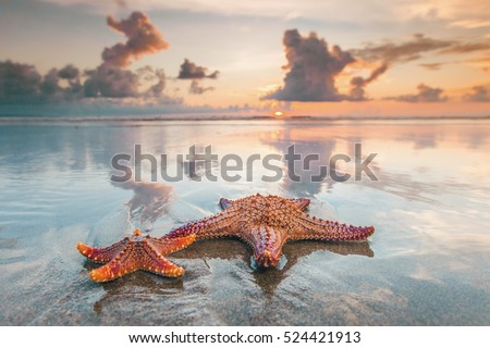 Two starfish on sea beach at sunset, Bali, Seminyak, Double six beach Royalty-Free Stock Photo #524421913