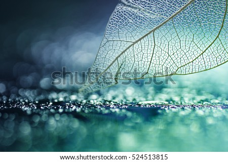 White transparent skeleton leaf with beautiful texture on a turquoise abstract background on glass with shiny water dew drops and circular bokeh close-up macro . Bright expressive artistic image.