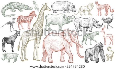 African animals set. Elephant, giraffe, buffalo, hippo, rhino, lion, cheetah, antelope, ostrich, hyena, lemur, gorilla, crocodile, bird Secretary, warthog, zebra, parrot, okapi. Vector illustration