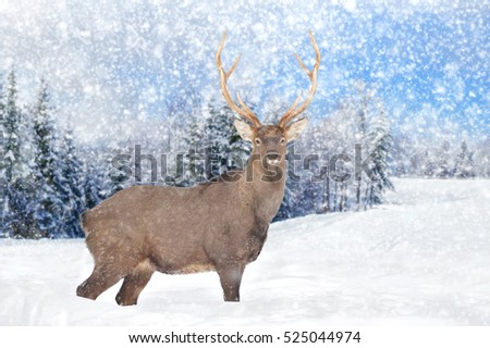 Close young deer in nature. Winter time #525044974