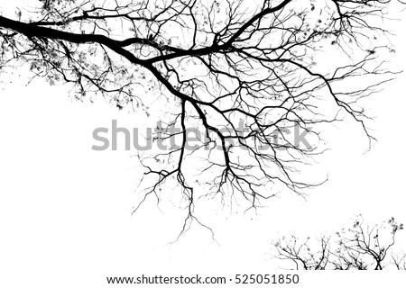 Bare tree branches on a pale white background #525051850